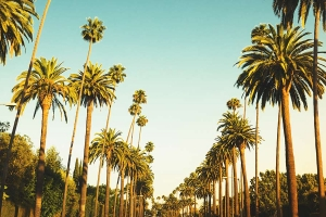 Palm trees view in LA