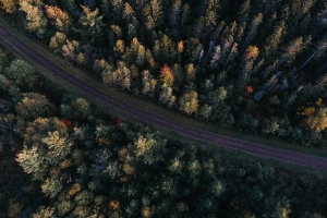 Aerial photo of forest trees with a road going through the middle